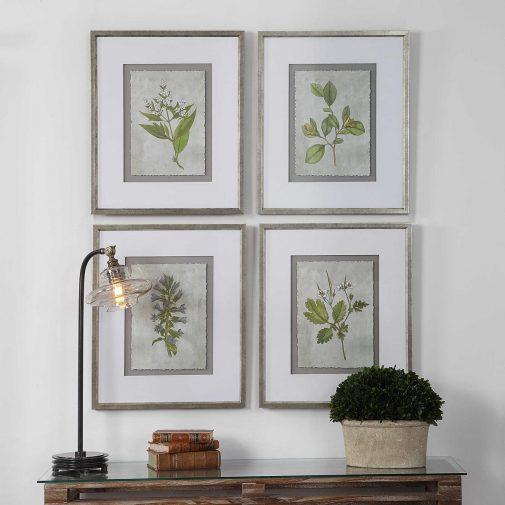 Framed Nature Prints